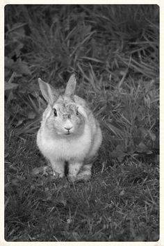 Rabbit in the wild.
