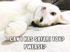 This cat really wants a Safari Ltd toy!
