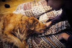Suomalaistutkijat: Koira saattaa ehkäistä lapsen diabetesta
