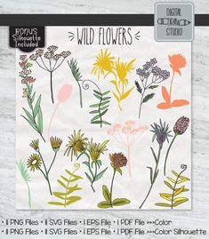 Garden Illustration, Graphic Illustration, Colorful Flowers, Wild Flowers, Illustrator Cs5, Plant Vector, Flower Studio, Outline Drawings, Vector Graphics