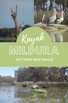 There are so many things to do in Mildura it's the perfect holiday spot. From the Murray to Mungo you'll love the area's history and beauty. We have visited Mildura with and without the kids and we think there are things to do here to suit travellers of any age.#victoria #rivermurray #australia #kayak #riverland #curiouscampers Melbourne Victoria, Victoria Australia, Australia Living, Australia Travel, Stuff To Do, Things To Do, Melbourne Street, Amazing Destinations, Travel Destinations