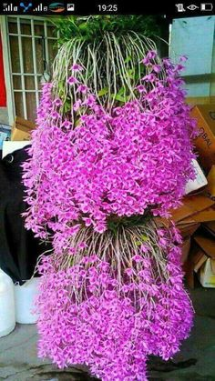 Sublimes orquideas
