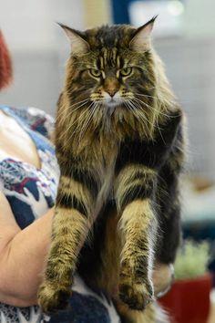 Międzynarodowa Wystawa Kotów na Bielanach, Poland