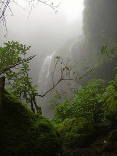 Tourist Attraction India: Green And Hot Tourist Place India | water fall india