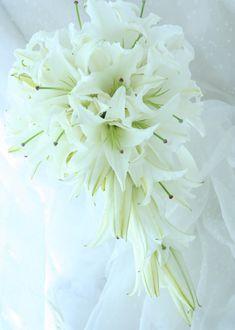 ブーケ キャスケード ユリの白 : 一会 ウエディングの花 Lily Bouquet Wedding, Floral Wedding, Wedding Flowers, Lilly Flower, Vintage Lace Weddings, Wedding Photography Tips, Floral Arrangements, Floral Design, Random