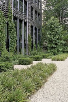 Carex morrowii 'variegata' Pinned to Garden Design by Darin Bradbury.