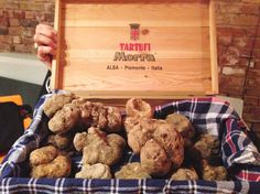 It was a bad year for grapes and olives in Italy, but a fantastic one for truffles! A hunt in Alba, Piedmont. http://www.huffingtonpost.com/erica-firpo/truffle-hunting-in-alba_b_6136678.html #ItalyTraveller