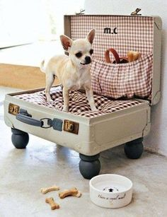 so darn cute! make a pet bed out of a suitcase. & I already have the chihuahua! Diy Pour Chien, Old Suitcases, Pet Beds, Cool Dog Beds, Puppy Beds, Dog Beds For Small Dogs, Diy Doggie Beds, Tiny Dog, Diy Stuffed Animals