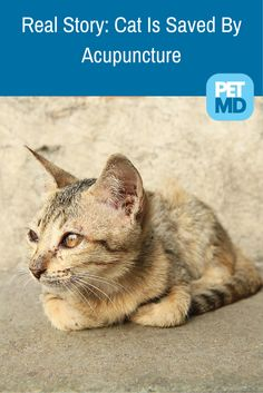 A few days ago we talked about acupuncture in cats - here's a real story of how this method saved this cat's life! Take a look!