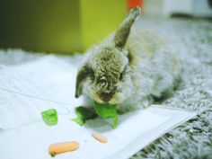 Bunny Keeps an Ear out for the Sound of More Veg - July 14, 2011