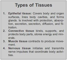 anatomy 4 types of tissue Anatomy Study, Body Anatomy, Cell Parts And Functions, Tissue Types, Nursing School Notes, Biology Lessons, Biology Teacher, Human Body Systems, Science Notes
