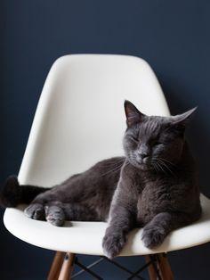 Аристокот. #кот #AristoCat