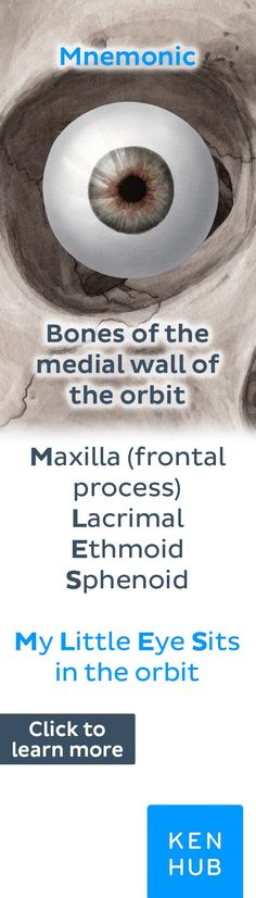 Quick mnemonic. Click to read our full, free article about the bones of the orbit! #anatomy #mnemonic