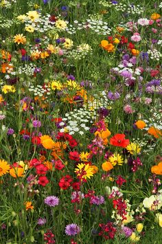 Wild Flower Meadow, Meadow Flowers, Pretty Flowers, Wild Flowers, Beautiful Flowers Images, Flower Images, Beautiful Landscapes, Beautiful Gardens, Nature Aesthetic