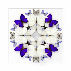 Beautifully Colorful Mosaics and Other Artistic Compositions Made from Exotic Insects by the Artist Christopher Marley Mandala Art, Christopher Marley, Art Papillon, Butterfly Art, Butterflies, Beautiful Bugs, Beautiful Collage, Insect Art, Hirst
