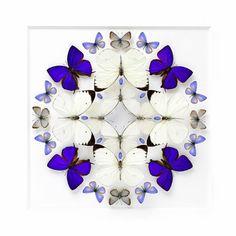 Une série intitulée 'Biophilia' réalisée par l'artiste Christopher Marley dans laquelle toutes sortes d'insectes exotiques sont disposés en mosaïque.