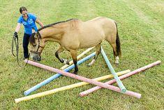 CAVALLO Übungen fürs Pferdegehirn