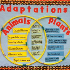 A good way to compare and contrast animals and plants is to use a hula hoop venn diagram. This can be put on the bulletin board and can be hung up for an extended period of time and is easy to see.