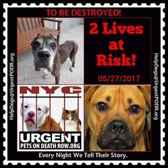 TO BE DESTROYED 05/27/17 - - Info   To rescue a Death Row Dog, Please read this:http://information.urgentpodr.org/adoption-info-and-list-of-rescues/  To view the full album, please click here:http://nycdogs.urgentpodr.org/tbd-dogs-page/ -  Click for info & Current Status: http://nycdogs.urgentpodr.org/to-be-destroyed-4915/