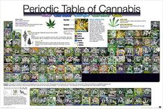 Periodic Table of Cannabis (Weed Marijuana Table) Novelty Drug Smoking Humor Poster Print 24x36 Culturenik http://www.amazon.com/dp/B00KYZ0MJA/ref=cm_sw_r_pi_dp_.MaUub1R718BG