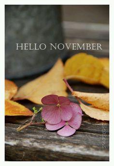 tinywhitedaisies — (via All Seasons: Hello November! Welcome November, Sweet November, November Month, Hello November, New Month, November Tumblr, November Images, November Pictures, November Quotes