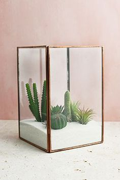 Glass Terrarium Display Case Copper Large create a smooth woodland setting, display miniature tropicalS or design a sweet fairy garden using plants, curios and found objects, such as pebbles and sea glass. Cactus Terrarium, Large Glass Terrarium, Glass Cactus, Cactus Flower, Cacti, Terrarium Table, Flower Bookey, Flower Film, Flower Pots