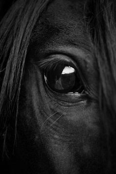 Cute Horses, Pretty Horses, Horse Love, Beautiful Horse Pictures, Most Beautiful Animals, Horse Girl Photography, Equine Photography, Black Horses, Wild Horses