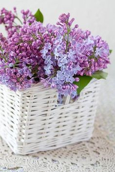 Sweet Sweet Lilac