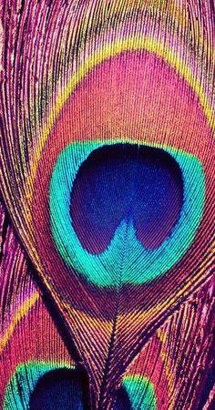 Pink Peacock Art Print by Retro Love Photography Pink Peacock, Peacock Colors, Peacock Feathers, Peacock Pattern, Bright Colors, Cute Wallpapers, Wallpaper Backgrounds, Iphone Wallpaper, Desenho Pop Art