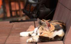 Cat sun basking