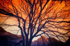 I hiked through a frost-covered meadow in the morning to get up under this tree.  And it was one of those meadows with very long grasses that formed little frosty mounds.  They give way with each step with the sound of a tiny crunch and spring back up after you pass.   - Yosemite, California  - Photo from #treyratcliff Trey Ratcliff at http://www.StuckInCustoms.com