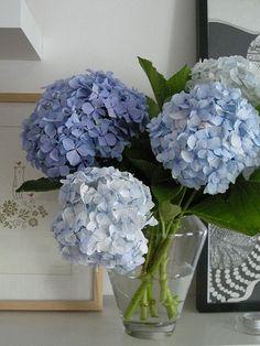 Varying shades of blue for a beautiful hydrangea flowers bouquet Hortensia Hydrangea, Hydrangea Care, Hydrangea Flower, My Flower, Hamptons Decor, The Hamptons, Bouquet Champetre, East Hampton, Hampton Style