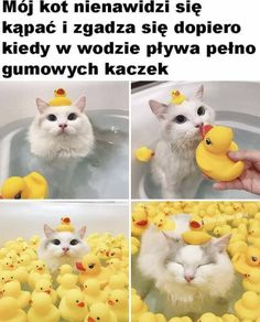 Funny Animal Jokes, Cute Funny Animals, Funny Animal Pictures, Funny Cute, Cute Cats, Cute Pictures, Hilarious, Image Chat, Cute Memes