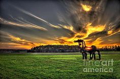 Uga Iron Horse Posters - The Iron Horse Sunset Poster by Reid Callaway