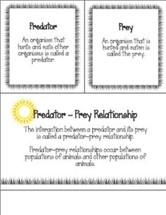 predator prey relationships matchbook foldable from mrs bs best on 3 pages. Black Bedroom Furniture Sets. Home Design Ideas