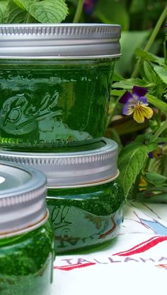A few years ago I had mint jelly on Lamb Chops for the first time and loved it. But trying to find mint jelly in most grocery stores is nearly impossible. Mint Jelly is mildly sweet and just a little tart, with a wonderful fresh mint flavor. Uses For Mint Leaves, Mint Leaves Recipe, Drying Mint Leaves, Fresh Mint Leaves, Lemon Jelly Recipe, Lemon Balm Recipes, Jelly Recipes, Jam Recipes, Canning Recipes