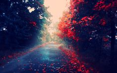 Autumn Leaves Falling | Fall HD Wallpaper Autumn Leaves Are Red on Desktop Mac Background ...
