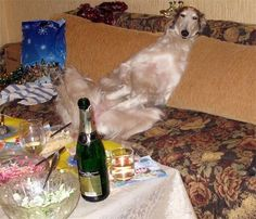 """This drunk.   31 Animal Pictures That Will Make You Say """"WTF"""""""