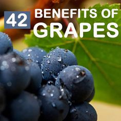 42 Amazing Benefits And Uses Of Grapes: A recent study by a University of Missouri researcher shows that resveratrol found in grape skins and red wine, can make certain cancer cells more vulnerable to radiation treatment.