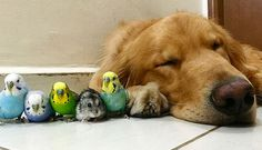 Cute photos of a golden retriever named Bob and birds are making the Internet rounds, but we have to ask: should the two mix?