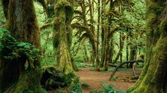 nature trees forest photography moss 1920x1080 wallpaper_www.wallpaperfo.com_91.jpg (728×409)