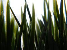 Decorative grass by xSharkiex.deviantart.com