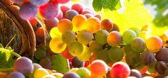 Guide des cépages - Hachette-vins.com