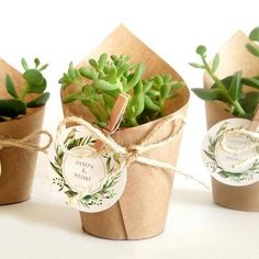 1000+ ideas about Succulent Wedding Favors on Pinterest | Wedding ...