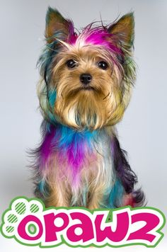 pet hair dye,pet glitter gel,styling gel,spa salt for pet grooming.opawz.com