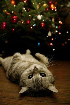 Esperando navidad