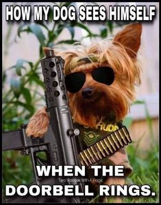 All you need to know about Pets Yorkie Dogs, Pet Dogs, Dogs And Puppies, Dog Cat, Yorkies, Chihuahua, Funny Animal Pictures, Funny Animals, Cute Animals