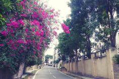 Typical suburban Bangalore  #bangalore #india #street #travel #travelphotography #road #earlybird #ig #morning