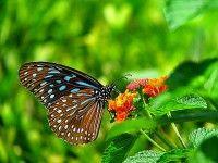 Para ver as borboletas é preciso tolerar algumas largartas. Foto de  薇 谭