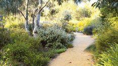 natural dry creek bed and tropical landscape design Australian Garden Design, Australian Native Garden, Australian Plants, Bush Garden, Dry Garden, Garden Paths, House Landscape, Landscape Design, Coastal Gardens